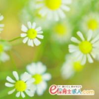 e保育士求人.com特選【15442-T】