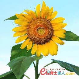 《京阪野江》月給18万円~☆認可保育園での正社員保育士